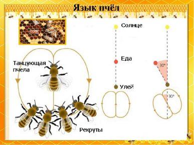 Язык пчёл