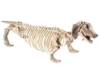 Скелет таксы