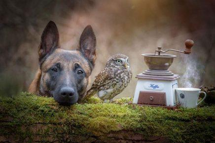 Дружба питомцев Инго и Польди