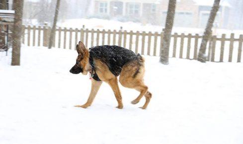 Собака Квазимодо