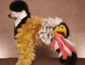 Окрашенный пудель - белый орёл