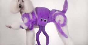 Окрашенный пудель осьминог