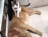 Собачья ревность