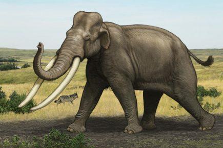 Прямобивневый слон