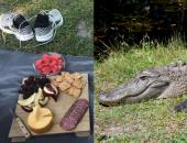 Пикник для аллигатора