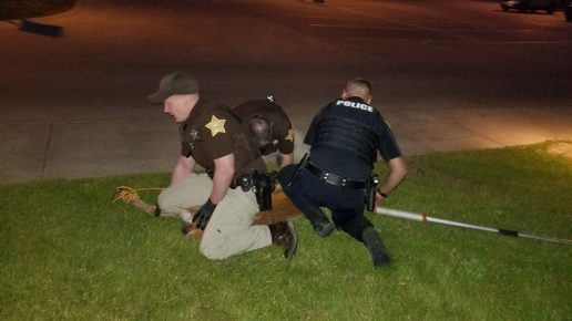 Полицейские связывают оленя