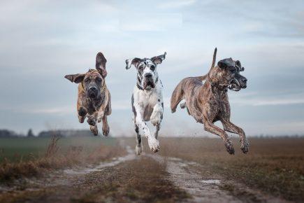 Собаки в полёте