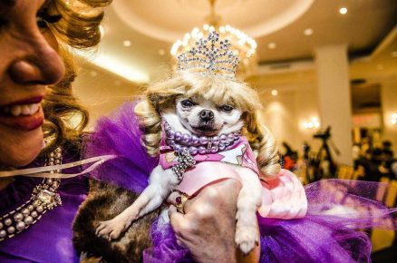 Собачка на одном из конкурсов красоты
