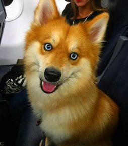 собака лиса