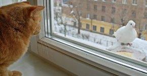 Рыжий кот с голубем