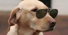 модная собака