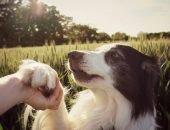 Собаку держат за лапку