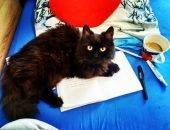 Кот на тетрадках