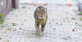 Реакция потерянного кота