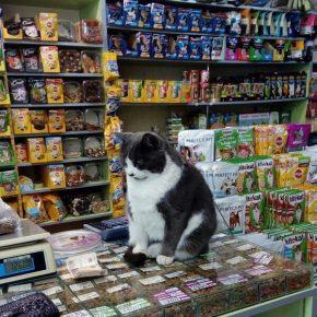Кот в зоомагазине