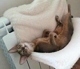 Кошка в гамаке Triol