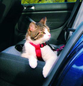 Кот, пристёгнутый ремнём безопасности TRIXIЕ