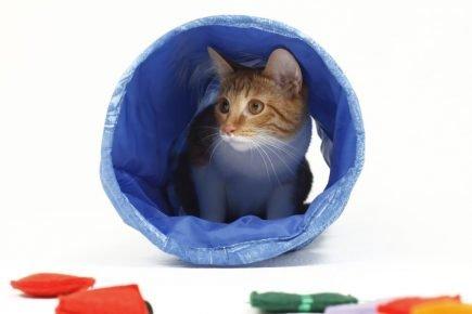 Кошка в тоннеле «Великий кот»