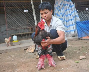 Слоновая курица и вьетнамец