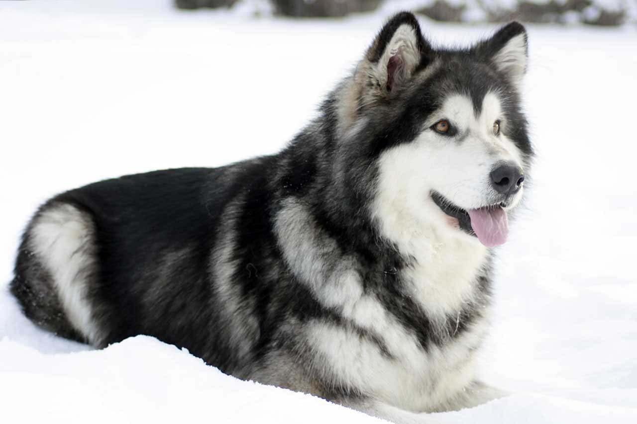 фото собак баламут вариантом праздника