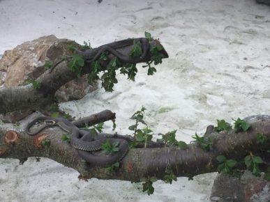 Змея на ветке