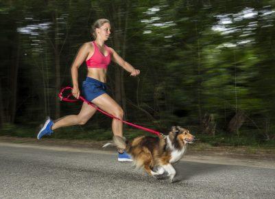 Утренняя пробежка с собакой