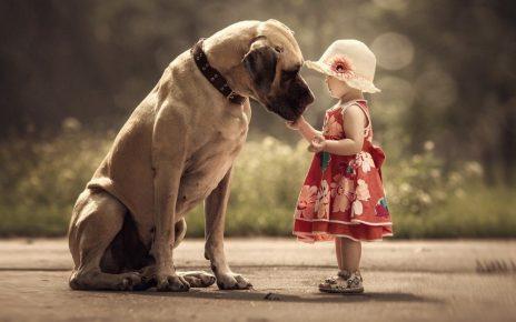 Большая собака и ребёнок