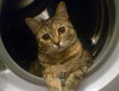 Кот выжил после часовой стирки
