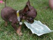 Налог на собак