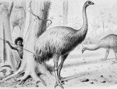 Гигантский страус