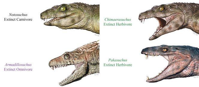 Реконструкция различных видов вымерших крокодиломорфов
