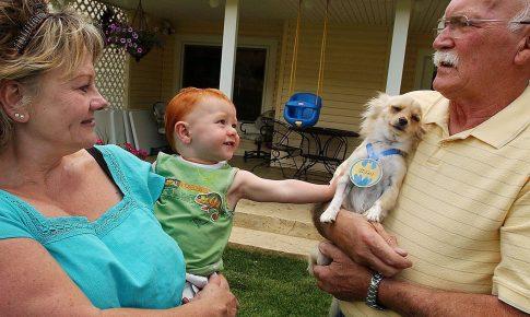 Чихуахуа на руках у своего хозяина и её реакция на ребёнка
