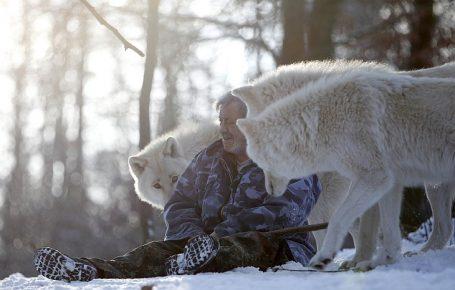 Волки и человек