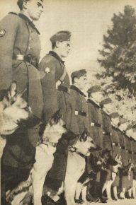 Фашистские солдаты с овчарками