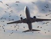 Столкновение птиц с самолётом