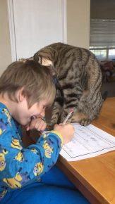 Кот мешает школьнику делать уроки