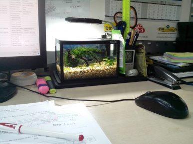 Аквариум на рабочем столе в офисе