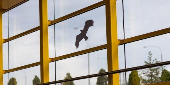 Наклейки с птицами в метро