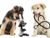 Лабораторная собака