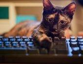 Кот лежит на клавиатуре