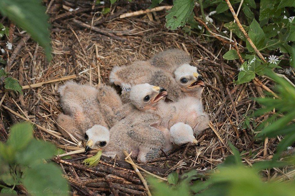 птенцы воробья в гнезде фото были абсолютно