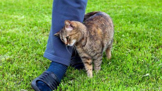Кошка трётся о ногу