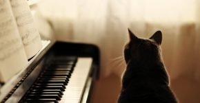 кошка у пианино