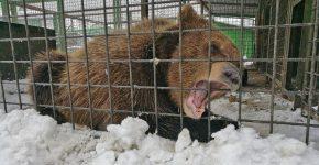 Реабилитация диких животных