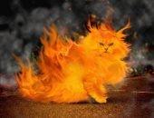 Кот и пожар