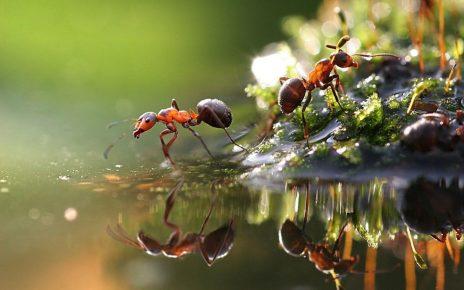 муравьи у воды
