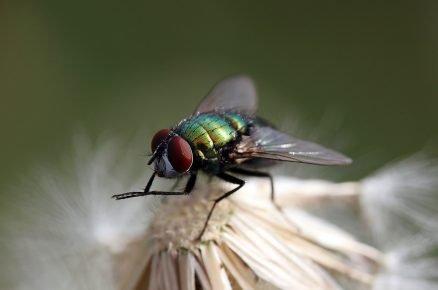 муха умывается