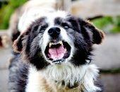 собака рычит