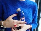 попугай в свитере