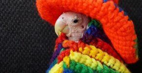 Rhea в мексиканском наряде